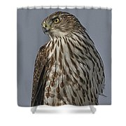 Hawk Beauty On The Lookout Shower Curtain