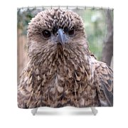 Brown Hawk Face Profile Shower Curtain