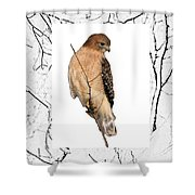 Hawk Framed In Branch Outline Shower Curtain