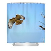 Hawk In Early October Shower Curtain