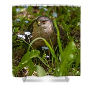 Hawk In The Grass Shower Curtain