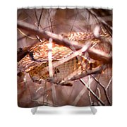 Hawk In The Woods Shower Curtain