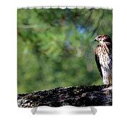 Hawk In Tree Shower Curtain