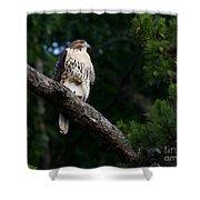 Hawk On Norris Lake Shower Curtain