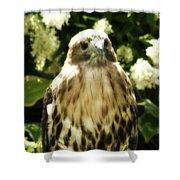 Hawk Portrait Shower Curtain