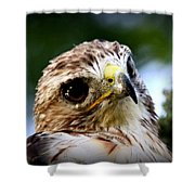 Hawk - Raptor - Living The Good Life Shower Curtain