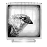 Hawk - Raptor Shower Curtain