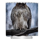 Hawk Red Tailed Shower Curtain