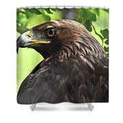 Hawk Scouting Shower Curtain