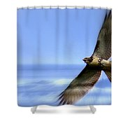 Hawk - Screams Of The Ocean Shower Curtain