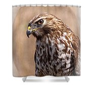 Hawk - Sphere - Bird Shower Curtain