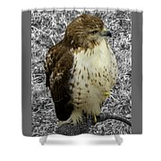 Hawk V3c Shower Curtain