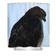 Hawkish Shower Curtain