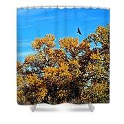 Hawks Afar Shower Curtain