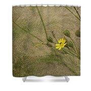 Hawksbeard Shower Curtain