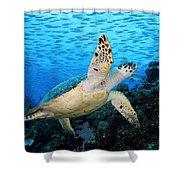 Hawksbill On Eldorado Shower Curtain