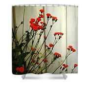 Hawkweed In Late Autumn Sun Shower Curtain