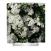 Hawthorn In Bloom Shower Curtain