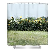 Hay Bales And Sunflowers Shower Curtain
