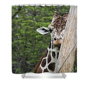Hay Not Just For Horses Shower Curtain