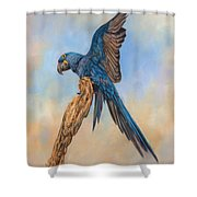 Hayacinth Macaw Shower Curtain by David Stribbling