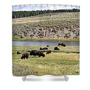 Hayden Valley Bison Herd In Yellowstone National Park Shower Curtain