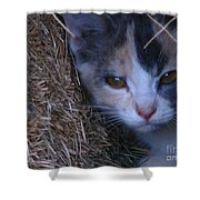 Haystack Cat Shower Curtain