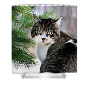 Hazel Eyes And Pine Shower Curtain by Christina Rollo