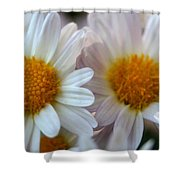 Hazy Day Daisies  Shower Curtain