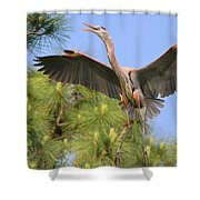Hb In The Pines Shower Curtain