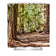 hd 379 hdr - Henry Cowell 2 Shower Curtain