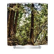 hd 380 hdr - Nisene Marks Shower Curtain