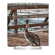 hd 392 hdr - Pelican On The Pier Shower Curtain