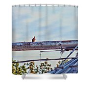 Hdr Bird On A Pipeline II Shower Curtain