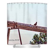 Hdr Dove On A Pipe Shower Curtain