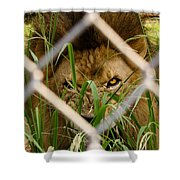 He Didn't Like Me Photographing Him Shower Curtain by Robert L Jackson