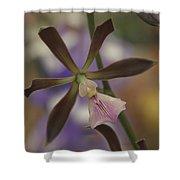 He Pua Ke Aloha - The Flower Of Love - Orchidea Tropicale Shower Curtain