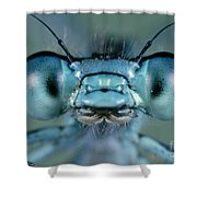 Head And Compound Eyes Of Damselfly Shower Curtain