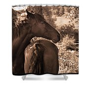 Head And Tail Shower Curtain