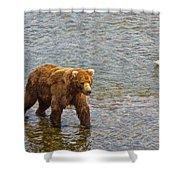 Head Grizzly Bear And Sea Gull In Moraine River In Katmai Np-ak  Shower Curtain