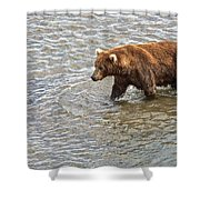 Head Grizzly Bear With Intense Fishing  Focus For Salmon In Moraine River In Katmai Np-ak Shower Curtain