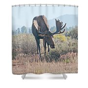 Head Lowered Bull Moose Shower Curtain
