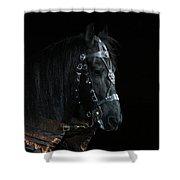 Head Of An Equine Warrior Shower Curtain