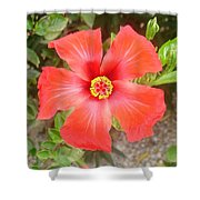 Head On Shot Of A Red Tropical Hibiscus Flower Shower Curtain