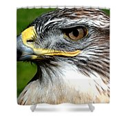Head Portrait Of A Eagle Shower Curtain