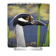 head shot - Yellow crowned Night Heron Shower Curtain
