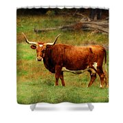 Heading For The Barn Shower Curtain