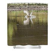 Headless Snowy Egret Of Rum Creek Shower Curtain