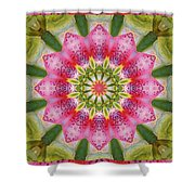 Healing Mandala 25 Shower Curtain by Bell And Todd