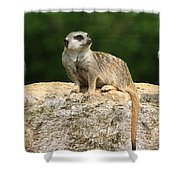 Hear No Evil See No Evil Speak No Evil Shower Curtain